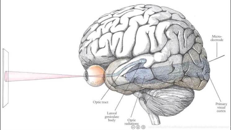 Eye and Brain (1)